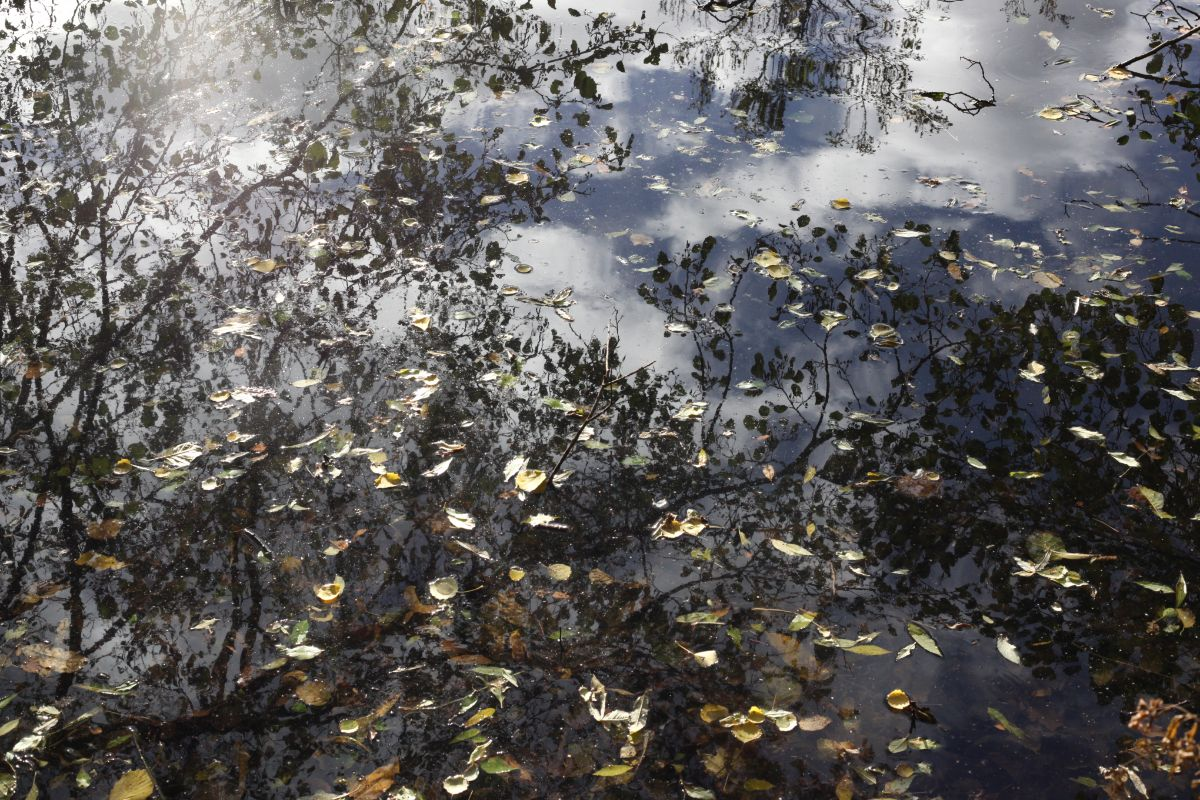 Reflections 8